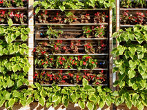 Het tuinieren op de muur Stock Foto