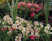 Het tuinieren schoonheid van aard Stock Foto