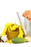 Het tuinieren stilleven van gewas van verse groenten met gieter Royalty-vrije Stock Foto's