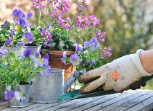 Het tuinieren in tuin Stock Foto's