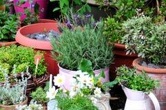 Het tuinieren van de container Stock Foto