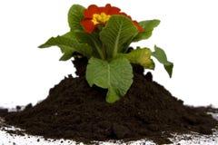 Het tuinieren van de lente Royalty-vrije Stock Afbeeldingen