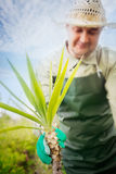 Het tuinieren van de lente Royalty-vrije Stock Foto's