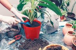 Het tuinieren van het huis Stock Afbeeldingen