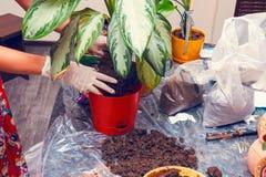 Het tuinieren van het huis Stock Fotografie