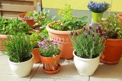 Het tuinieren van het terras of van het dak Stock Foto's