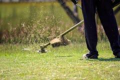 Het tuinman scherpe gras door grasmaaimachine Stock Afbeelding