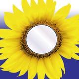 Het Tussenvoegsel van de zonnebloem Stock Foto