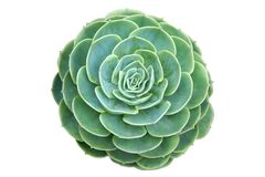 Het type van cactus van succulente installatie Royalty-vrije Stock Afbeeldingen