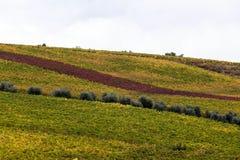 Het typische landschap van Toscanië stock foto's