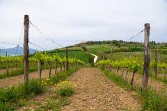 Het typische landschap van Toscanië stock foto
