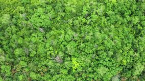 Het uitgaan van luchtlengte van dicht bos stock videobeelden