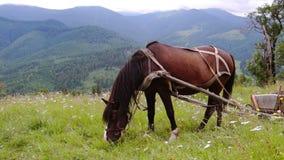 Het uitgeruste Paard Weiden in een Weide stock footage
