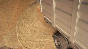 Het uitgieten van korrel van de vrachtwagen stock video