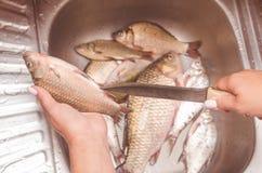 Het uithalen en het schoonmaken van vissen over de gootsteen Stock Afbeelding
