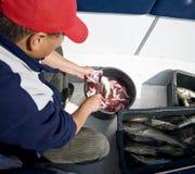 Het uithalen van de mens vissen Stock Foto's