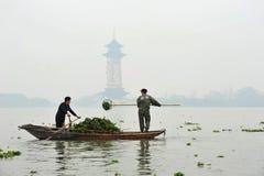 Het uithollen van waterhyacint in China royalty-vrije stock foto