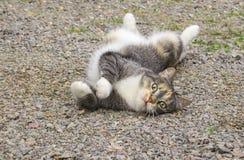 Het uitrekken zich grijze en witte gestreept weinig kat, die op de grond in het platteland liggen Stock Foto's