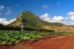 Het uitspreiden van de mens insecticide op een pompoenengebied Stock Afbeeldingen