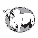 Het uitstekende embleem van de stierenzeboe Stock Afbeeldingen