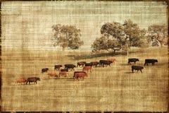 Het uitstekende Landschap van Koeien Stock Foto