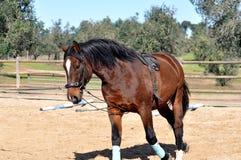 Het uitvallen van een paard Stock Fotografie