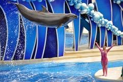 Het uitvoeren van Dolfijn en Trainer Stock Afbeelding