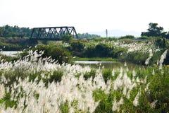 Het uitzicht bloeit gras en van de Brug spoorweg Stock Afbeelding