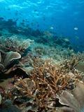 Het Uitzicht van de Tuin van het koraal Stock Foto