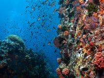Het Uitzicht van de Tuin van het koraal Stock Afbeeldingen