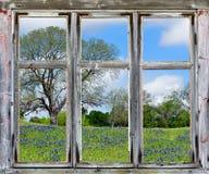 Het uitzicht van Texas bluebonnets door een oud raamkozijn Stock Foto's