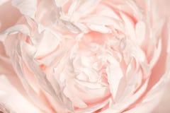 Het Unfocusedonduidelijke beeld nam bloemblaadjes, abstracte Romaanse achtergrond, pastelkleur en zachte bloemkaart toe stock fotografie