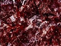 Het vaatstelsel van het bloed stock foto
