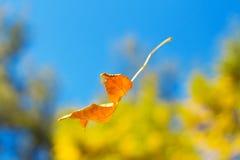 Het vallen in het bos de herfstblad royalty-vrije stock fotografie
