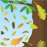 Het vallen onderaan eiken bladeren. Royalty-vrije Stock Afbeelding