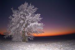 Het vallen van de avond op een extreme koude de winterdag Royalty-vrije Stock Fotografie