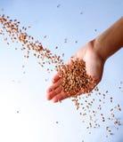 Het vallen van zaden stock fotografie