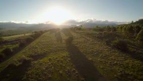 het vangen van de stralen van de zon door een boom, zonsondergang in de berg stock videobeelden