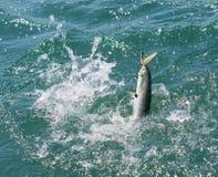 Het vangen van een Blauwe Vis Stock Fotografie