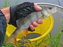 Het vangen van een vis Royalty-vrije Stock Foto