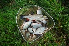 Het vangen van vissen Royalty-vrije Stock Afbeeldingen
