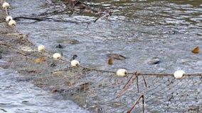 Het vangen van vissen in de vijver stock footage