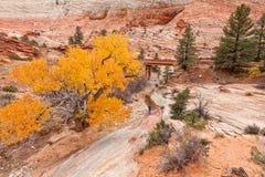 Het vangen van Zion National Park Fall Landscape Stock Afbeeldingen