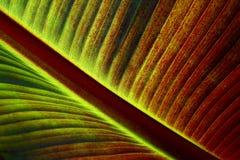 Het Varenblad van de palm Royalty-vrije Stock Afbeeldingen