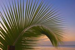 Het varenblad van de palm Stock Foto