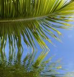 Het varenblad van de palm dat in water wordt weerspiegeld royalty-vrije stock afbeeldingen