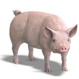 Het varken geeft terug Royalty-vrije Stock Foto
