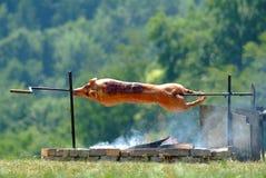 Het varken van de zuigeling Stock Foto's