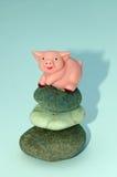 Het varken van Zen Stock Foto's