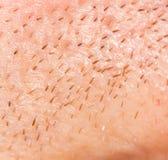 Het varkenshaar op de huid Close-up royalty-vrije stock foto's